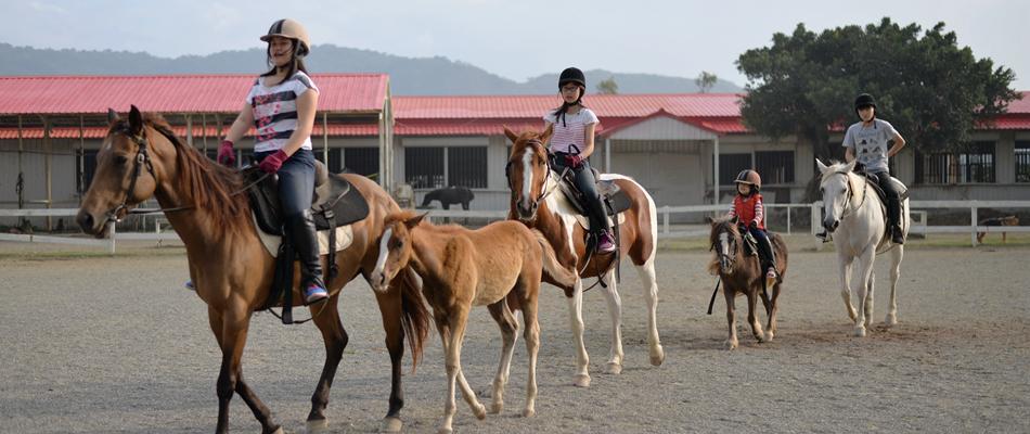 寒暑假馬術訓練營熱情招生中,給孩子一個難忘的團隊活動體驗!